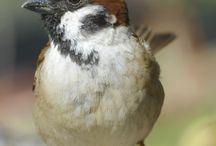 Bird project / birbs.