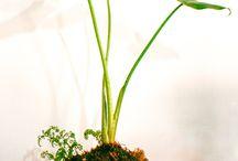 Kokedamas / Kokedamas, plantas en bolas de musgo