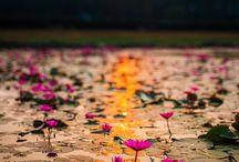 Cambodia / by Sarah G
