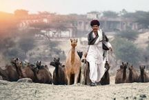 Rajasthan Forts & Palaces / Rajasthan ranks amongst the top holiday destinations of India frequented by domestic and overseas travelers during winter months. The visitors from around the world come here to experience the royal splendor of the bygone era and explore the vast expanse of Thar Desert.