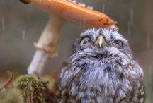 pöllöt ja muut söpöt jutut