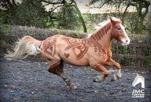 horses- at