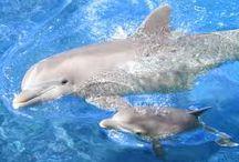 delfin, bálna, beluga
