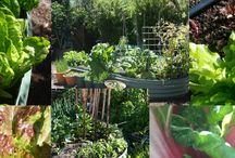 Your Patch Organic Gardening