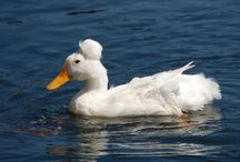 Ducky Ducky / by Tsz Tung