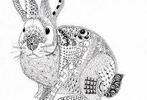 Lapins rabbits