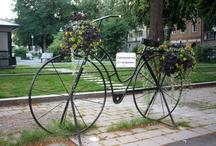 Nordic Bikes by Wendy / by Wendy Steinmetz