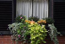 okenní truhlíky