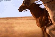 Gify z końmi / [Horses]