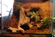 Terrarium inspiration / Ideas for terrariums! Contains mostly spider and snake stuff.