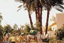 Arabian Nights / by Elizabeth Ann Miller