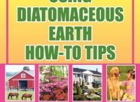 Diatomaceous Earth / by Susan Hoyt