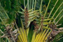 Art Floral and Vegetation