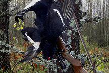 Metsästys Hunting