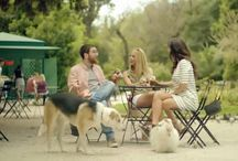 Dog Commercial