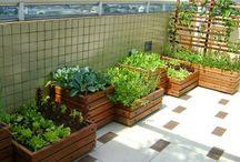warzywny ogródek