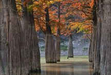 tress...& naturalized areas / Trees are A-Mazing!!! / by Richard Carter