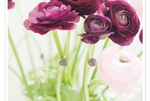 My Flowers and Fun Backyard  / by Ann Matthews