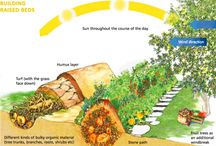 Garden Inspiration / by Eryn Hughes