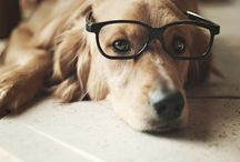 Lovelies :: Adorable animals