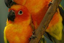 Papagáje / Papagáje