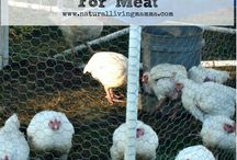 poultry / by Kristin Crocker