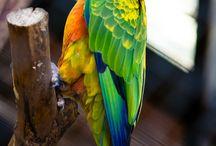 pappagalli.