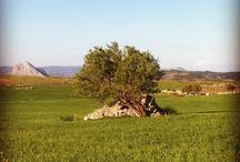 Antequera, mi tierra