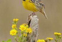 Vtáčia perspektíva / Birds perspective