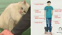 benefícios que o felino trás a saúde