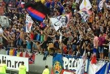 Suporter Steaua