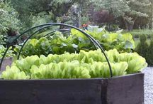 Vegetable garden/ Trädgård / Hyötypuutarha / Ideas for own vegetable garden