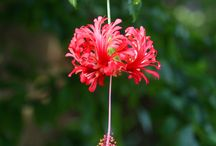 August Blooms at Fairchild! / by Fairchild Tropical Botanic Garden