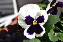 Gardening, fiori e piante / Giardinaggio, cura delle piante, coltivazioni varie, decorazioni floreali.