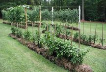 Gardening tips and tricks / Everything to do with building and maintaining a beautiful and sustainable home garden!  / by Cindy Dowdle-Schoen