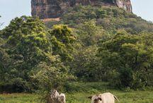 Sri Lanka / Travel with Bender.  Family Travel made easy in Sri Lanka.