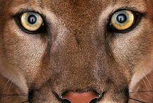 ALL GOD'S CREATURES OF THE ANIMAL KINGDOM ! / by JOE ACOSTA