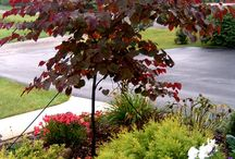 Landscape-Trees & Shrubs / Tree's & Shrubs  to your landscape. / by Linda Finni