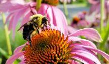 BioDiversidad / Paisajes, medio ambiente,ciencia sobre la naturaleza y proyectos para un mundo mejor