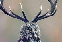 Deer...Antlers / by Tracey Setze