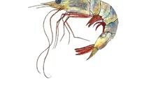 Mr. Shrimp