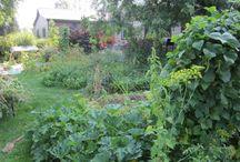 Organic Fertilizers / Anything About Organic Fertilizers