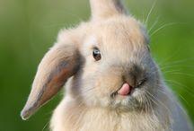 Fluffy bunnies / by Mikaela Coston