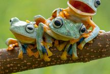 pretty frogs