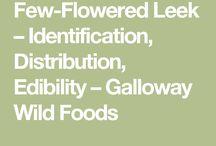 Growing Few-flowered leek