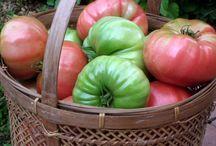 Rip pen Green Tomatoes