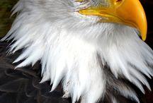 Eagle pics