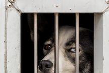 dog,look,hund,blick,eyes,ögon
