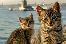 القطط على شاطئ أسكودار ... سكان مدينة اسطنبول مشهورين بحبهم للقطط / للحجز والاستعلام سجل على الرابط: http://www.beylikrealestate.co/ar/contact أو تواصل معنا مباشرة على الأرقام التالية: واتس آب - فايبر - لاين/ Whatsapp & Viber- Line 00905495050644- 00905495050623 00905495050641- 00905495050628 Office : 00902122194890 - Saudi:00966505324561 Register : http://www.beylikrealestate.co/ar/contact Website : www.beylikrealestate.co Facebook : www.facebook.com/beylik.turkey.real.estate Twitter : twitter.com/Beylikturkia Address : Harbiye, şişli /Istanbul/ Turkey