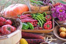 Garden Bounty Ideas / by Tekla Brzoza Helfrich